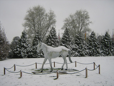 Desert Orchid Statue in the Snow at Kempton Park Racecourse
