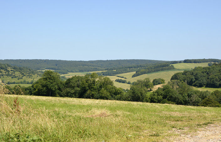South Downs countryside near Goodwood