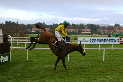 Horse Landing After a Jump at Leopardstown Racecourse