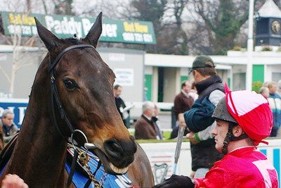 Racehorse and Jockey in the Leopardstown Parade Ring