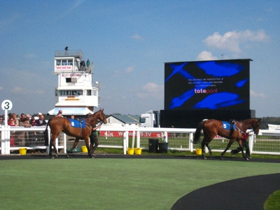 Paddock at Exeter Racecourse